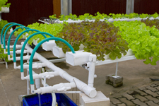 Hydroponic cultivation of plants